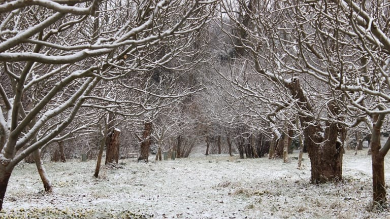 Winter Tree Walk at Wandlebury